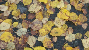 wet leaves on pavement